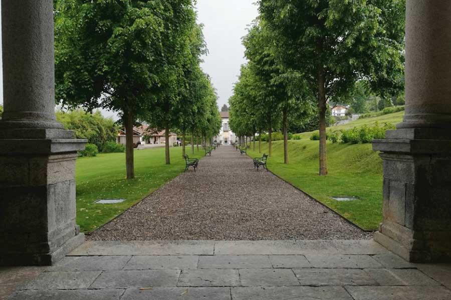 ecosystem-services-generati-dagli-alberi
