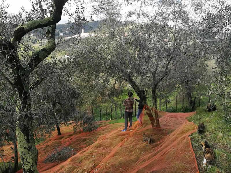 Studio Landscape Varese - Consulenze Agronomiche