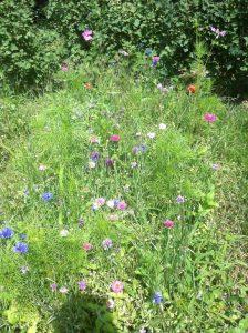 campo sperimentale prati fioriti